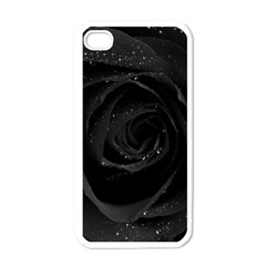 Black Rose Apple Iphone 4 Case (white) by Brittlevirginclothing