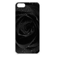 Black Rose Apple Iphone 5 Seamless Case (white)
