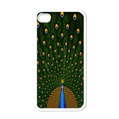 Peacock Feathers Green Apple Iphone 4 Case (white)