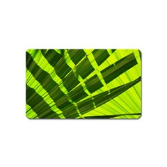 Frond Leaves Tropical Nature Plant Magnet (name Card) by Amaryn4rt