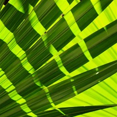 Frond Leaves Tropical Nature Plant Magic Photo Cubes by Amaryn4rt