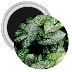 Green Leaves Nature Pattern Plant 3  Magnets by Amaryn4rt