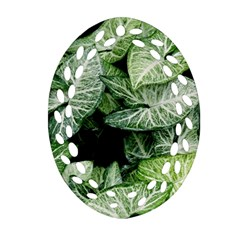 Green Leaves Nature Pattern Plant Ornament (oval Filigree) by Amaryn4rt