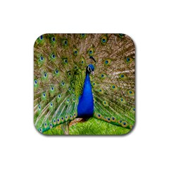 Peacock Animal Photography Beautiful Rubber Coaster (square)  by Amaryn4rt
