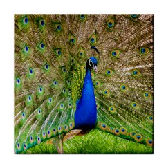 Peacock Animal Photography Beautiful Face Towel by Amaryn4rt