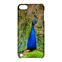 Peacock Animal Photography Beautiful Apple Ipod Touch 5 Hardshell Case With Stand by Amaryn4rt