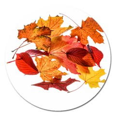 Autumn Leaves Leaf Transparent Magnet 5  (round) by Amaryn4rt