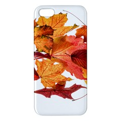 Autumn Leaves Leaf Transparent Iphone 5s/ Se Premium Hardshell Case by Amaryn4rt