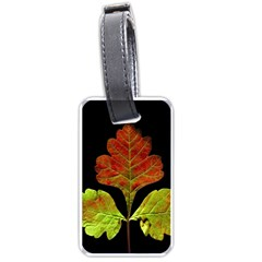 Autumn Beauty Luggage Tags (one Side)  by Nexatart