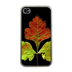 Autumn Beauty Apple Iphone 4 Case (clear) by Nexatart
