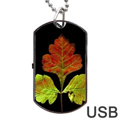 Autumn Beauty Dog Tag Usb Flash (two Sides) by Nexatart