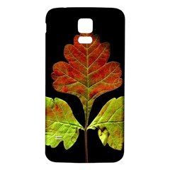 Autumn Beauty Samsung Galaxy S5 Back Case (white) by Nexatart