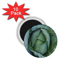 Bright Cabbage Color Dew Flora 1 75  Magnets (10 Pack)