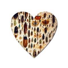 Insect Collection Heart Magnet by Nexatart