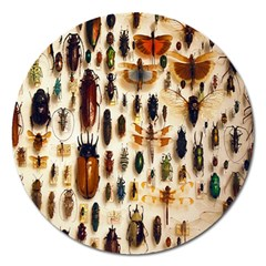 Insect Collection Magnet 5  (round) by Nexatart