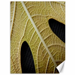 Yellow Leaf Fig Tree Texture Canvas 36  X 48   by Nexatart