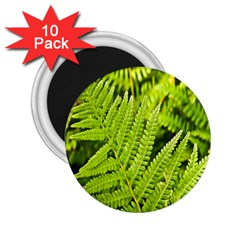 Fern Nature Green Plant 2 25  Magnets (10 Pack)  by Nexatart