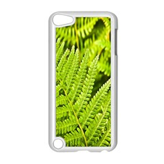 Fern Nature Green Plant Apple Ipod Touch 5 Case (white) by Nexatart