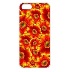 Gerbera Flowers Blossom Bloom Apple Iphone 5 Seamless Case (white)