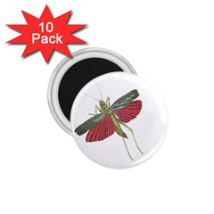 Grasshopper Insect Animal Isolated 1 75  Magnets (10 Pack)