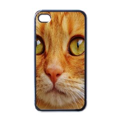 Cat Red Cute Mackerel Tiger Sweet Apple Iphone 4 Case (black) by Nexatart