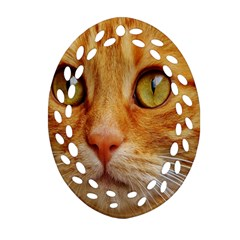 Cat Red Cute Mackerel Tiger Sweet Ornament (oval Filigree)