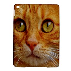 Cat Red Cute Mackerel Tiger Sweet Ipad Air 2 Hardshell Cases by Nexatart