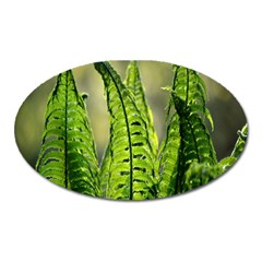 Fern Ferns Green Nature Foliage Oval Magnet