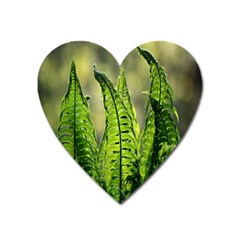 Fern Ferns Green Nature Foliage Heart Magnet by Nexatart
