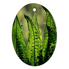 Fern Ferns Green Nature Foliage Oval Ornament (two Sides) by Nexatart