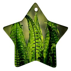 Fern Ferns Green Nature Foliage Star Ornament (two Sides) by Nexatart