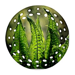 Fern Ferns Green Nature Foliage Round Filigree Ornament (two Sides) by Nexatart