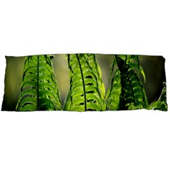 Fern Ferns Green Nature Foliage Body Pillow Case Dakimakura (two Sides) by Nexatart