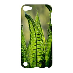 Fern Ferns Green Nature Foliage Apple Ipod Touch 5 Hardshell Case by Nexatart