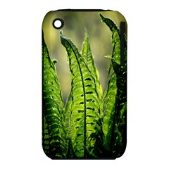 Fern Ferns Green Nature Foliage Iphone 3s/3gs
