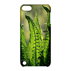 Fern Ferns Green Nature Foliage Apple Ipod Touch 5 Hardshell Case With Stand by Nexatart