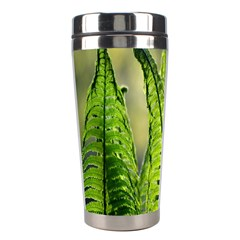 Fern Ferns Green Nature Foliage Stainless Steel Travel Tumblers by Nexatart