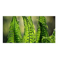 Fern Ferns Green Nature Foliage Satin Shawl by Nexatart