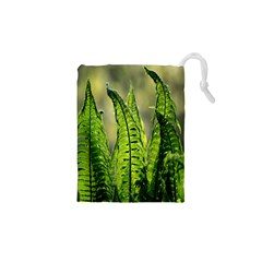 Fern Ferns Green Nature Foliage Drawstring Pouches (xs)  by Nexatart