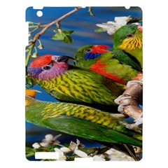 Beautifull Parrots Bird Apple Ipad 3/4 Hardshell Case by Nexatart
