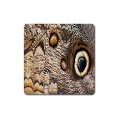 Butterfly Wing Detail Square Magnet