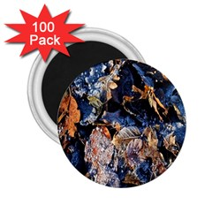 Frost Leaves Winter Park Morning 2 25  Magnets (100 Pack)  by Nexatart