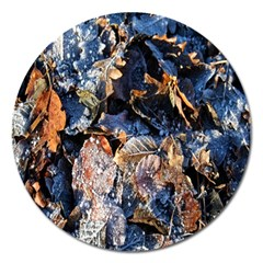 Frost Leaves Winter Park Morning Magnet 5  (round) by Nexatart