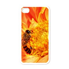 Honey Bee Takes Nectar Apple Iphone 4 Case (white)