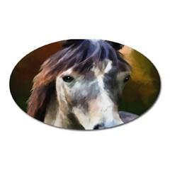 Horse Horse Portrait Animal Oval Magnet by Nexatart