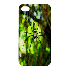 Spider Spiders Web Spider Web Apple Iphone 4/4s Hardshell Case by Nexatart