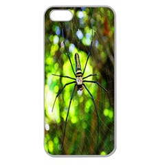 Spider Spiders Web Spider Web Apple Seamless Iphone 5 Case (clear) by Nexatart