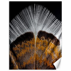 Spring Bird Feather Turkey Feather Canvas 12  X 16