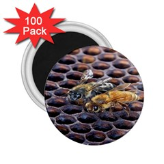 Worker Bees On Honeycomb 2 25  Magnets (100 Pack)  by Nexatart