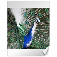 Animal Photography Peacock Bird Canvas 18  X 24   by Amaryn4rt